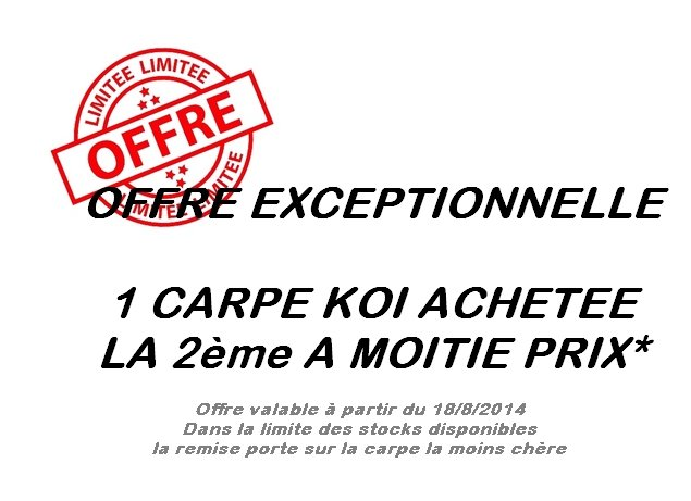 Koi by koi les carpes koi for Prix des carpes
