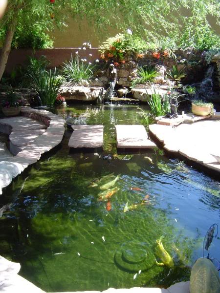 Koi by koi pompe bassin for Koi carp pool design